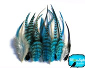 Rooster Feathers, 2 Dozen - Short BLUE MIX Grizzly Rooster Hair Extension Feathers : 307