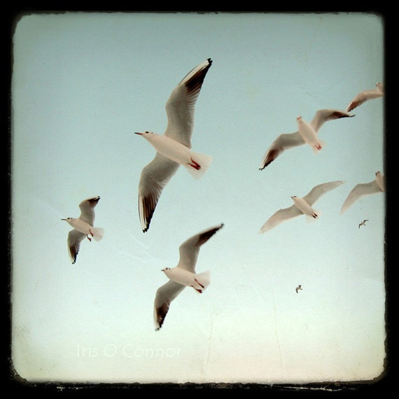 Birds flying Blue Sky ttv texture Vintage style Nature Fine Art Photography Wall Decor  8x8""