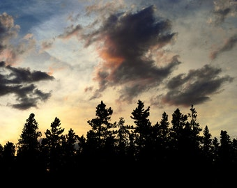 Pine Forest Sunset Twilight Evening Alpenglow Rocky Mountains Fading Light Colorado Rustic Cabin Lodge Photograph