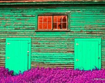 Green Barn and Purple Grass Art  Photograph