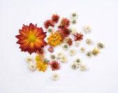 Flores. 8x10. Fine Art Photographic Natural History Print. Minimal style. Natural Home Decor. Indoor garden botanical.