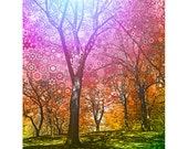 The.Wonder.Tree...16x20 fine art print / psychedelic trippy surreal nature photograph / visionary art