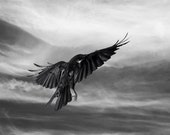 Crow Art Photography Limited Edition Fine Art Print, Black and White, Tempest