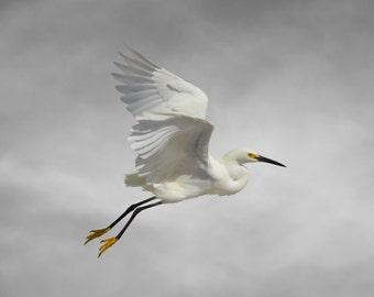 Bird Art, Limited Edition Fine Art Print, Beach Art, Snowy Egret, Limited Edition Photography Bird Art Print, Fine Art Photography