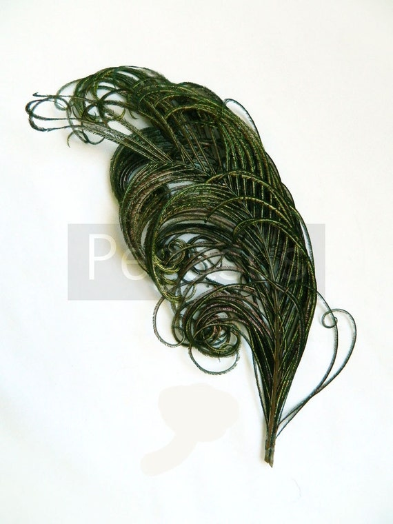 "Sprig of NATURAL peacock feather PLUME (1 Piece)(6-8"")(16 color option) hats, fascinators, headdresses, headbands and floral arrangements"