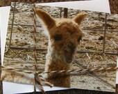 Bad Day Alpaca Note Card