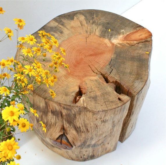 Large Tree Stump Coffee Table: Tree Stump Coffee Table BIG