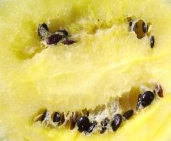 Watermelon, Organic Peace Yellow Watermelon Seeds - Incredibly Tasty Compact Watermelon Ready in Months