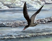 Black Skimmer - Open edition print of an original watercolor (fits 11x14 frame)