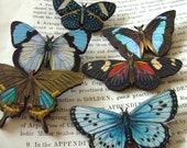 Large, Wooden,  BUTTERFLY Brooch, Choose B1,2,3,4,5,6, brooch, wood, by NewellsJewels on etsy