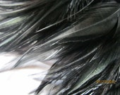 "Selling Out 3"" strip Black Strung Rooster SADDLES Feathers (individual feather 3.5"")"