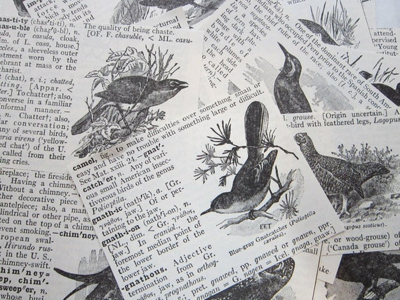 50 antique dictionary illustrations - BIRDS - collage supplies