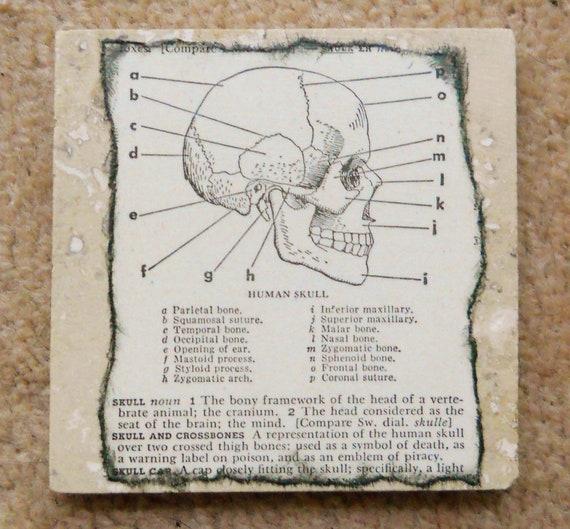 Human Skull Marble Tile Drink Coaster -- Original Vintage 1951 Dictionary Page -- Halloween, Goth, Steampunk, Skeleton, Macabre, OOAK