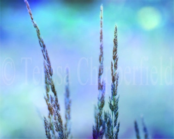 Coastal Photography, Soft and Gentle, Floral Photo Print, Blue Wall Art, Dreamy Beach Home Decor, Lazy Summer Days, Beach Grass, 8x10, 11x14