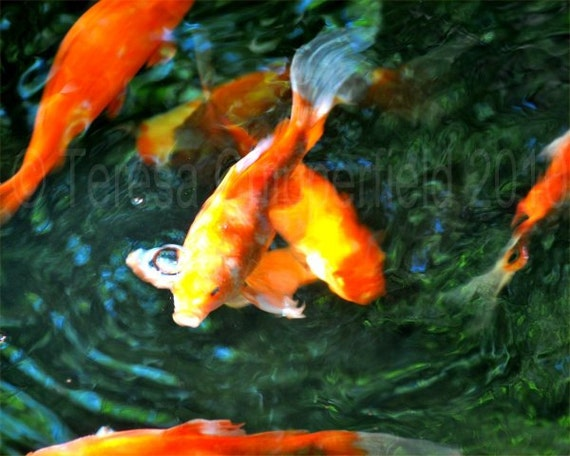 Items similar to happy koi photo fine art photography for Happy fish swimming