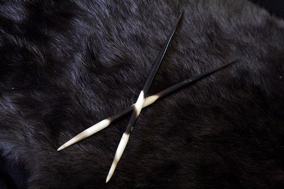 Price Reduced - x2 African Porcupine Quills - Taxidermy, Q2411200 - Grade A
