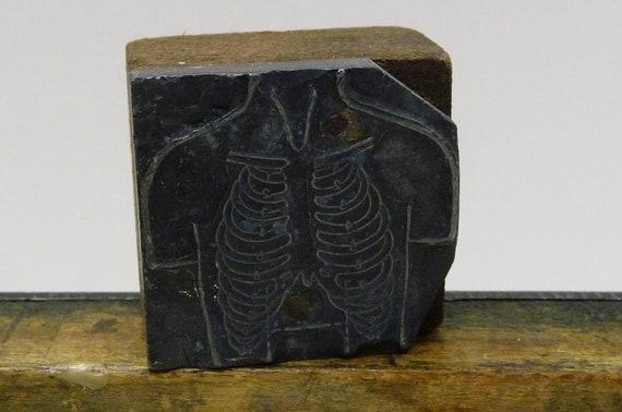 Antique Print block Rib cage Lungs Human Anatomy letterpress