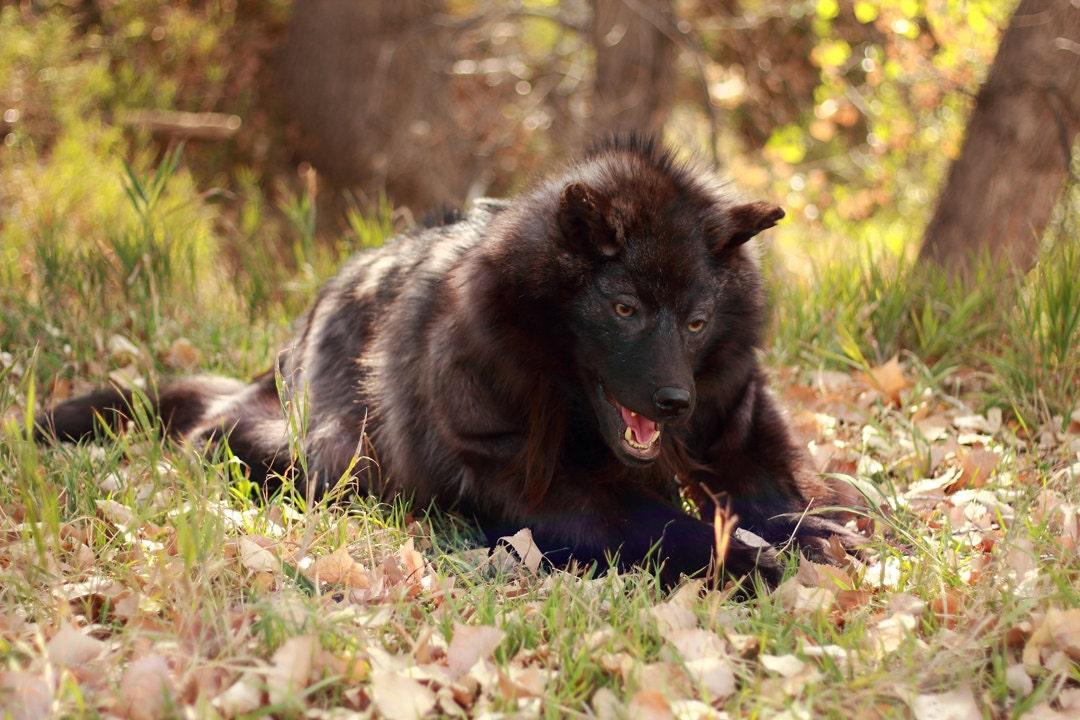 Realistic werewolf costume - photo#15