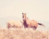 Light Monochromatic Horse Photograph, Delicate Soft Landscape Photograph, 8x10
