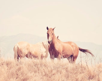 Light Monochromatic Horse Photograph, Delicate Soft Landscape Photograph, 8x10