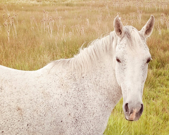 Brightly Colored Horse Photograph, Color Horse Photograph, White Horse Art, White Horse Photography, 8x10