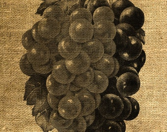 INSTANT DOWNLOAD - Grapes Vintage Illustration - Download and Print - Image Transfer - Digital Sheet by Room29 Sheet no. 651