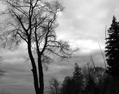 Scenery, Reaching, black and white photograph, trees on skyline, Toronto, Canada, home office decor, gift 30