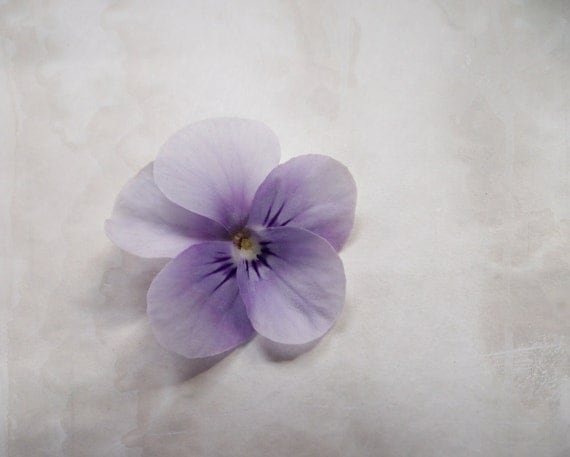 Flower Photography Purple Lilac Minimalist Home Decor 10x8 Print Viola