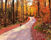 Follow Me - autumn road travel nature fall scenes, october, fall forest, fiery red maples, altered, fantasy woodland - 8x12 - finchfieldart