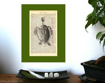 Turtle Skeleton Vintage Anatomical Art Print on Antique 1896 Dictionary Book Page