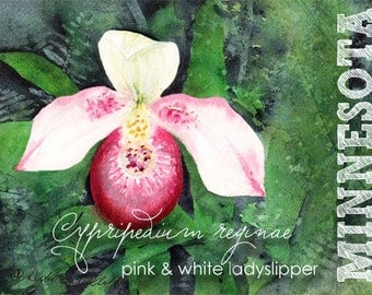 Minnesota, Watercolor ACEO, State Flowers, Ladyslipper, Cypripedium reginae