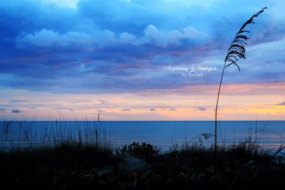 Beach Photography - Sea Oats,  Sunset photo, Storm Clouds, Blue and pink, Venice Florida, Beach Fine Art Photography, Beach Wall Art,