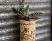 Succulent Cork Magnet,  Grape Vine Kalanchoe