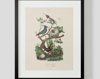 Hummingbird Plate 419