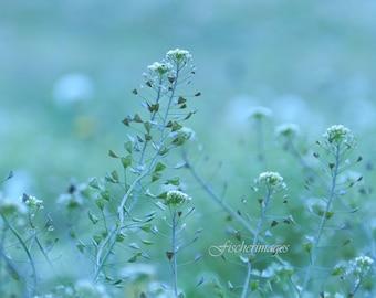 Heart Pod Flower Fine Art Photography