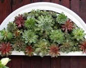 Living Wall Doorway Arch - Comes preplanted,ready to hang