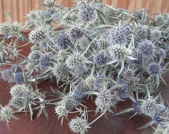 Natural Dried Silver Blue Green Sea Holly Flowers Thistle Like Country Prim Decor Shabby Floral