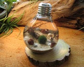 Marimo Terrarium Kit by Midnight Blossom - Reclaimed Light Bulb with Living  Japanese Moss Ball - Underwater Terrarium