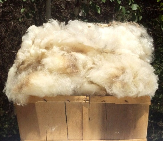 1 LB of Distinctly Different Wool - Raw Unwashed Sherino/Romney Cross Fleece - Soft White Luster