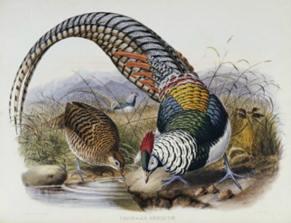 Pheasants - Cross stitch pattern pdf format