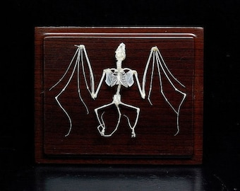 Real bat skeleton with case and base, Christmas Gift