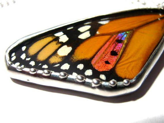 Real Monarch Sunset Moth Butterfly Pendant