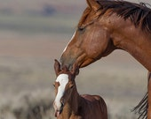 Mare and Funny Face - Fine Art Wild Horse Photograph