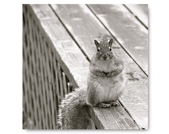 Gray Squirrel photo, woodland, animal, black and white, nature, wildlife, cheeky, outdoor, gray, cute squirrel photo