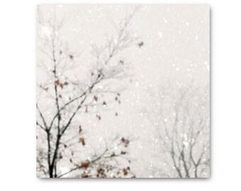 Snow Landscape, Winter Snow Print, Winter Photography, Bare Tree branches, Snowy Landscape, snow photo, snow print, winter, white, wintery