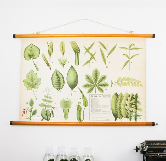 Botanical Pull Down School Chart Leaves, French School Chart