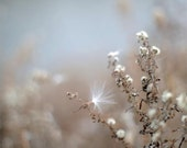Earth Tones, Nature, Plants, Blue, Brown,  - Fine Art Photography Giclee Print Cotton Seed - Winter By The Water