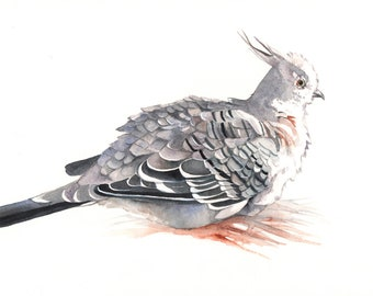 Crested Pigeon painting - Bird art nature wildlife -  print of watercolor painting 5 by 7 print, bird art, wall art, home decor