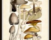 Mushroom Series 1 Plate 7 Antique Botanical Art Print 8 x 10 Home Decor Digital Collage Home and Garden