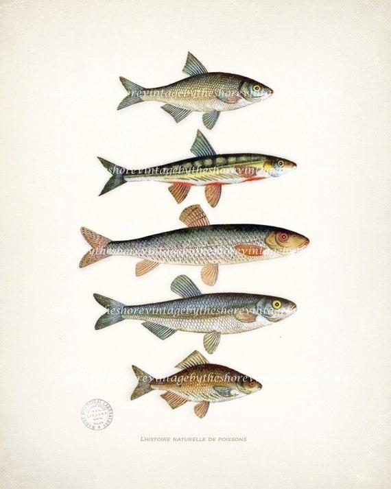 A Natural History of Fish Nautical Art Print Print 8x10